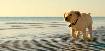 First Teaser Trailer For Marley And Me So Cute
