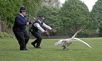 Hot Fuzz Review