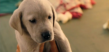 Marley & Me Full Trailer
