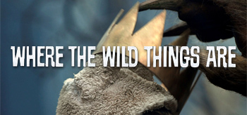 New Where the Wild Things Are Photos